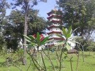 Flower and pagoda: a harmonious match. Гармоничное сочетание цветка и пагоды.